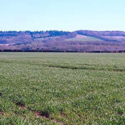 Sheepcote Farm Field Hire
